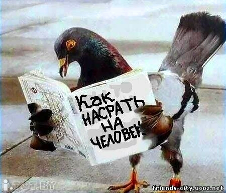 http://s0.uploads.ru/2AWfT.jpg