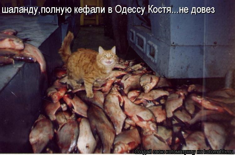 http://s0.uploads.ru/KS8eO.jpg