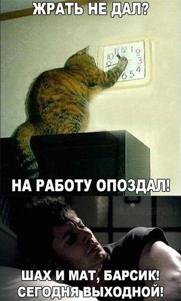 http://s0.uploads.ru/Ng2MV.jpg