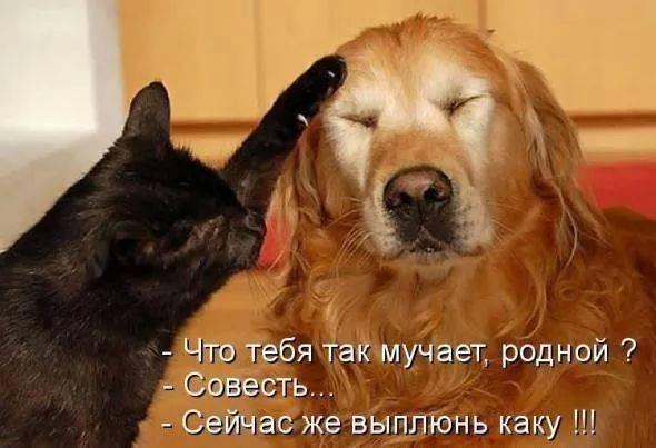 http://s0.uploads.ru/V3tC1.jpg