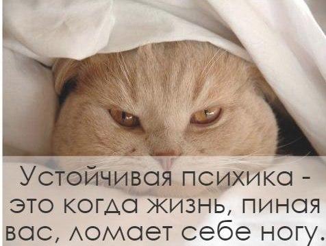 http://s0.uploads.ru/b5Qwx.jpg