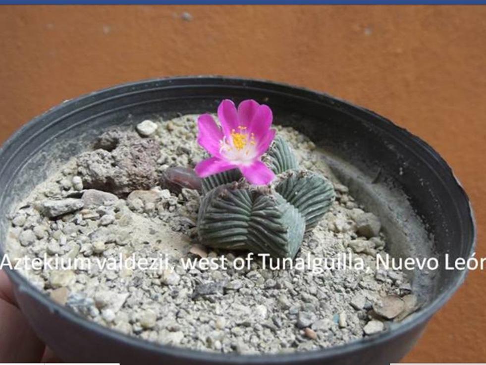 new Aztekium found Rnbqv