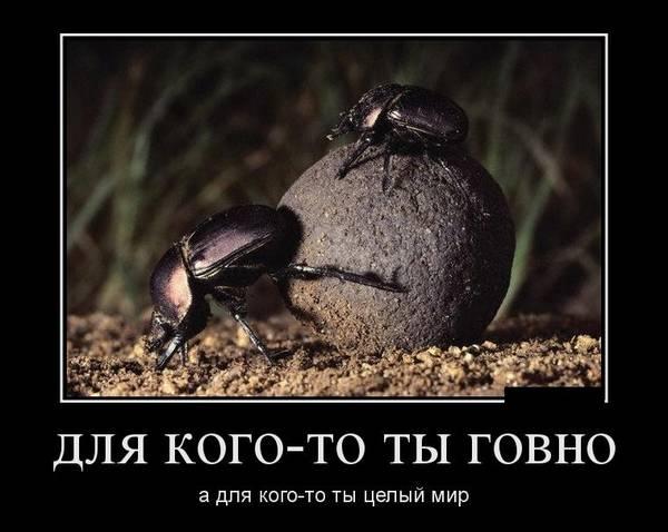 http://s0.uploads.ru/t/1xDtK.jpg
