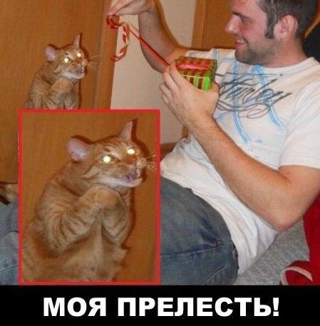 http://s0.uploads.ru/t/DKn2U.jpg