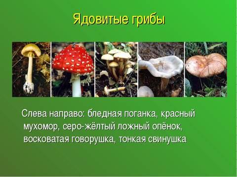 http://s0.uploads.ru/t/LG3bC.jpg