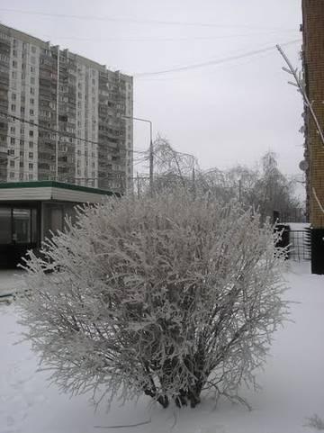 http://s0.uploads.ru/t/MuVis.jpg