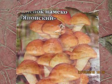 http://s0.uploads.ru/t/OkPZt.jpg