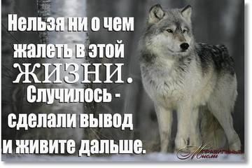 http://s0.uploads.ru/t/RNkLZ.jpg