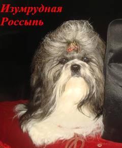 http://s0.uploads.ru/t/TbSnh.jpg