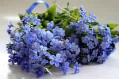 http://s0.uploads.ru/t/aurJp.jpg