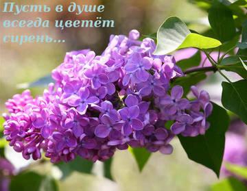 http://s0.uploads.ru/t/buqk2.jpg