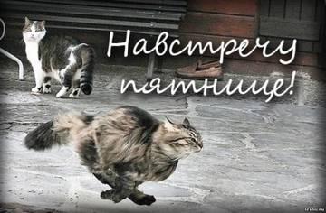 http://s0.uploads.ru/t/fDVLu.jpg
