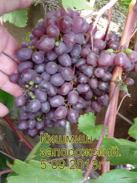 http://s0.uploads.ru/t/m0yUi.jpg