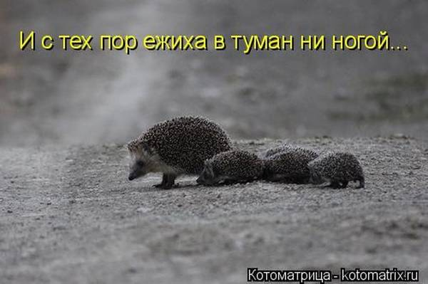 http://s0.uploads.ru/t/nKrO2.jpg