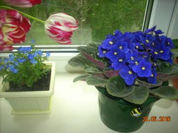 http://s0.uploads.ru/t/u6Zbw.jpg