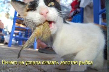 http://s0.uploads.ru/t/xkpGK.jpg