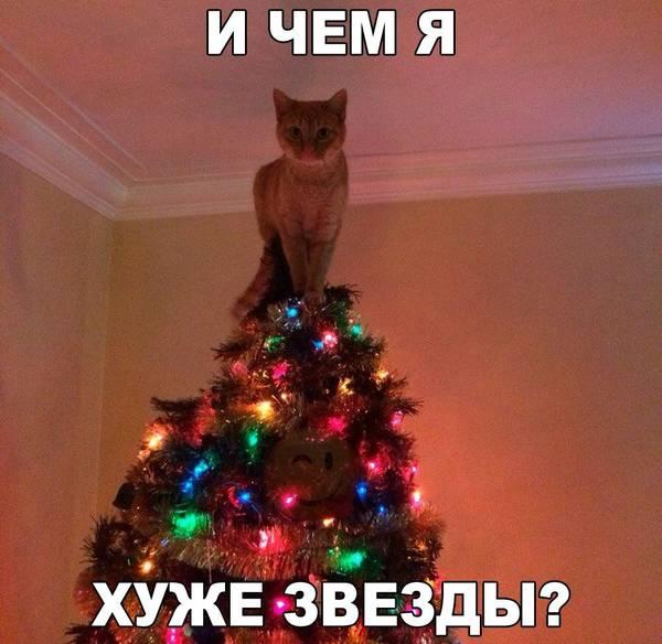 http://s0.uploads.ru/t/ya1Zr.jpg