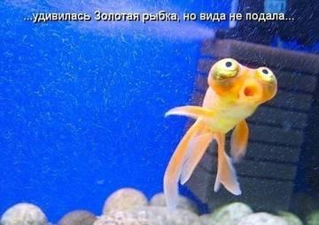 http://s0.uploads.ru/t/z9GvY.jpg