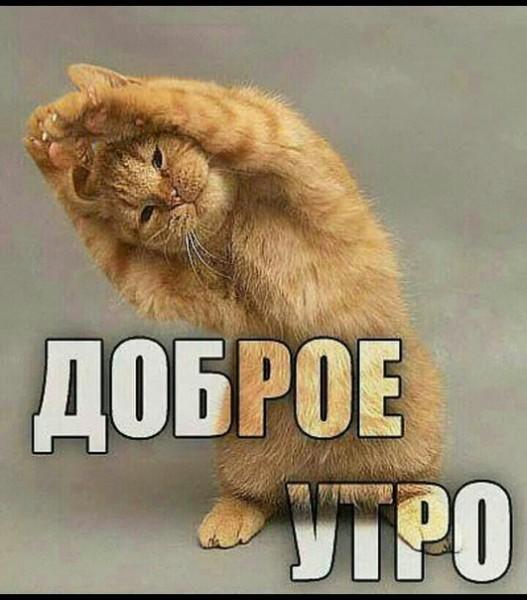 http://s0.uploads.ru/zcN7B.jpg