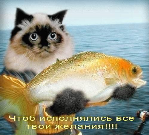 http://s0.uploads.ru/t/AGHYe.jpg